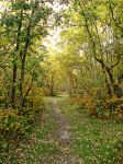 Manitoba Autumn by midnightstouchSTOCK