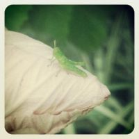 The Tiniest Littliest Grasshopper by MuffiaSmith