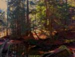 Submerged Forest by Willberr