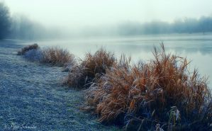 Misty lake. by Phototubby