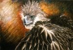 Philippine Eagle by 321nayr