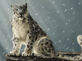 snow leopard by Anniez19