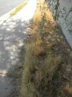 Strip of the Dead Grass by GleeAtack