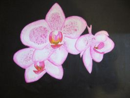orchids by Lino1983