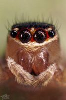 The Jumping Spiders Portrait by Trezizi