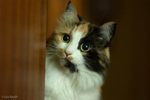 Beautiful Cat by Kelo342