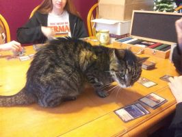 Tigger Playing MTG by winterwolf71