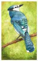 Blue Jay by Bumble-a-Bee