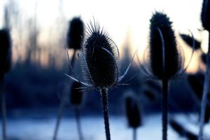 Cat Tails by Daggettgirl