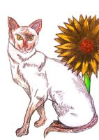 The Cat and the Sunflower by PoetressVex