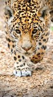 Unstoppable by Manu34