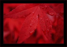 bloodred autumn by introversive