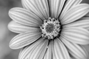 Black And White Flower by Caitiekabob