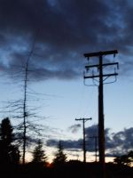 telephone poles by humanthistime