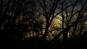 Nature of the Night by wwrithe