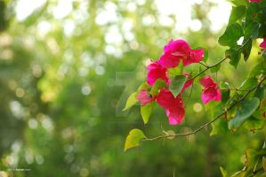 Pinky among the green by sarthahirah