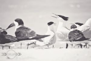 Lovers Key Shorebirds by CandiceSmithPhoto