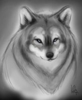 Wolfy 2 by ThermalFaerie