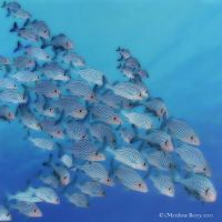 Fish Schooling-Glow by inspiredcreativity