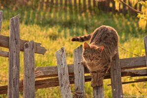Cat in the  morning 2 by GreenShadow23