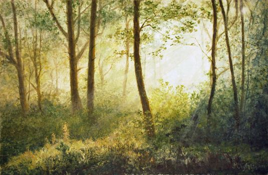 Misty-forest-light by modulis