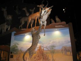 Leopard and Springbok 03 by Fireborn46