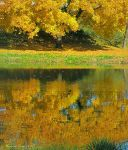 Tree and Reflection by VisionsSeen