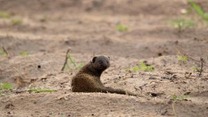 Content Mongoose by jockeaj