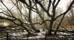Roots in Hell by photorip