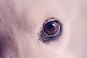 eyes by anddy24
