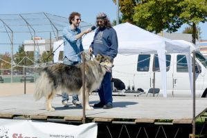 2014 Dog Festival, The Look Alike Contest 12 by Miss-Tbones