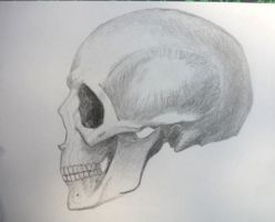 Skull (side face) by Leykats