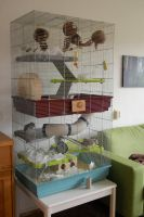 two-storey rat cage by were-were-wolfy