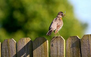 Late Bird Catches The.....Mosquito? by UriahGallery