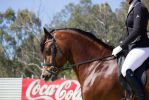 STOCK - Gold Coast Show 321 by fillyrox