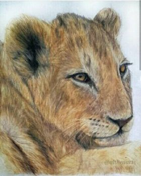 Lion drawing in colour pencil by AltheaWorld