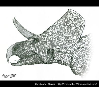 Zuniceratops christopheri by Christopher252