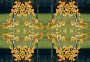 Gingko Biloba Quadrilaterally Symnmetrical Stereo by aegiandyad