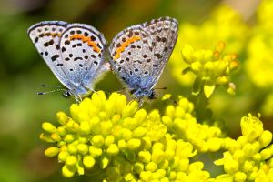 Whites Creek Butterfly Pairing by sellsworth