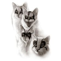 Black Metal Cats by Design-By-Humans