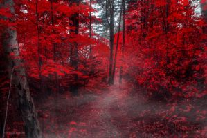 The Forest Of Sins by SL-PhotographySWE