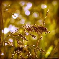 golden dreams III by JoannaRzeznikowska