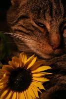 Flowercat by edwardcullenfreak