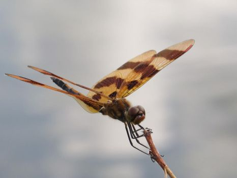 Halloween Pennant 1 by Windthin