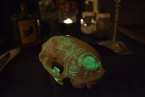 Bobcat Skull Side Back View Glow by ThePaintedCoyote
