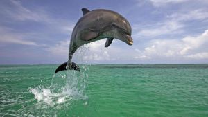 dolphin by LiquidSnake81