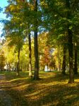 Shades of autumn by Lola22