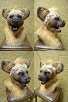 Alexeji Hyena Head by temperance
