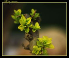 New leaves in October by ShlomitMessica
