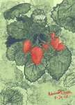 Strawberries by AutumnPGeer